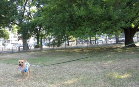 IMG_241615・8草刈り直後