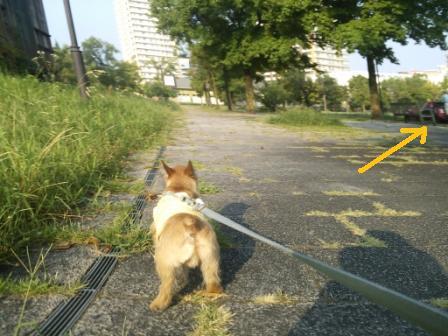 DSC_377315・8・5草刈り