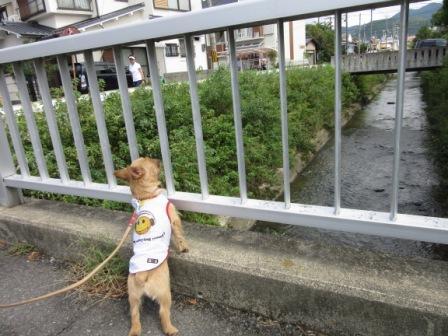 IMG_243215・8お盆京都