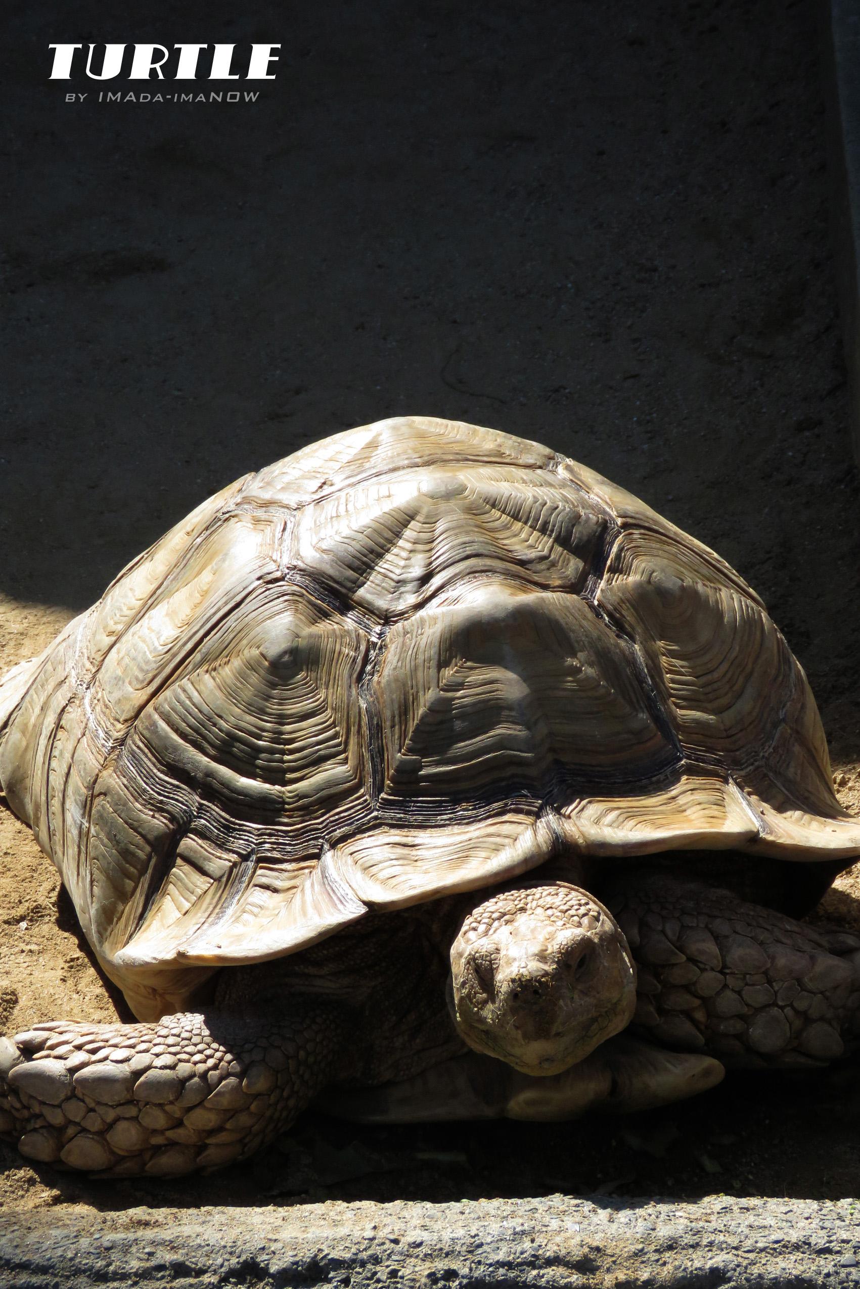 IMG_3035 turtle