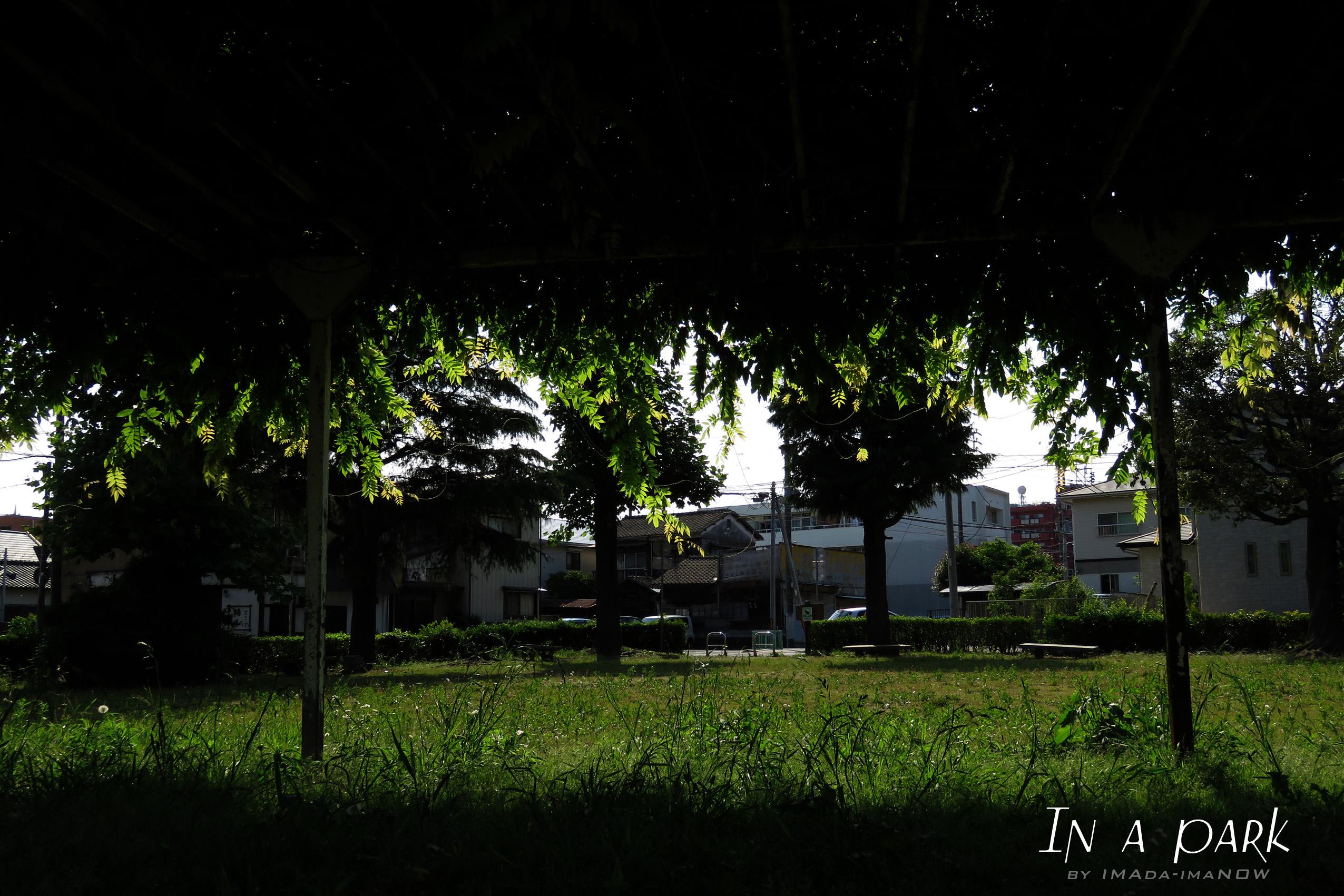 IMG_3912b.jpg