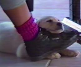 dog20140611-01.jpg
