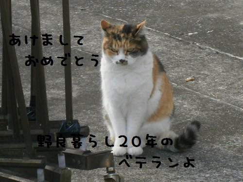 PC230145.jpg