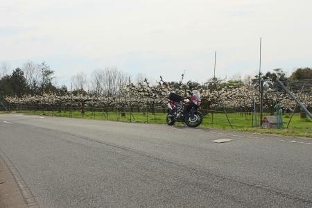 04花とバイク