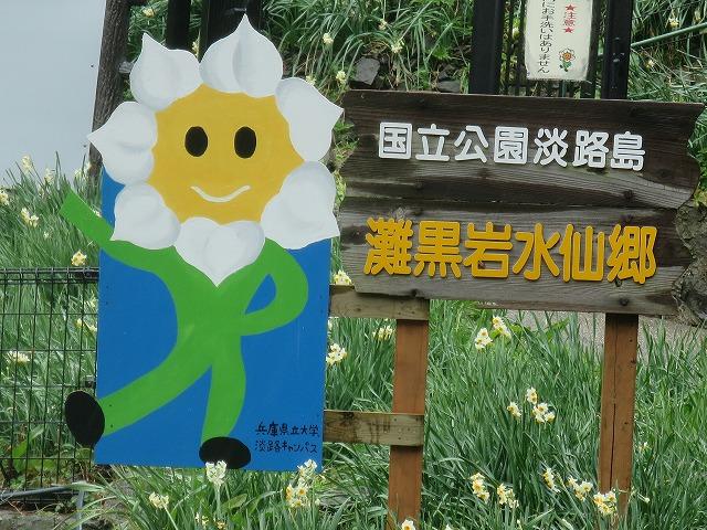 20150122 灘黒岩水仙郷 (1)