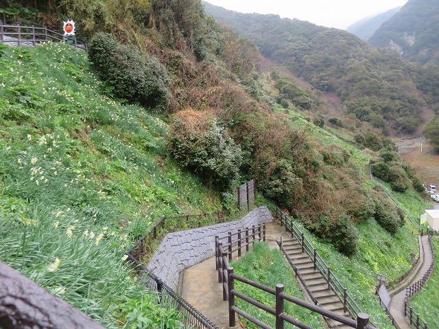 20150122 灘黒岩水仙郷 (30)