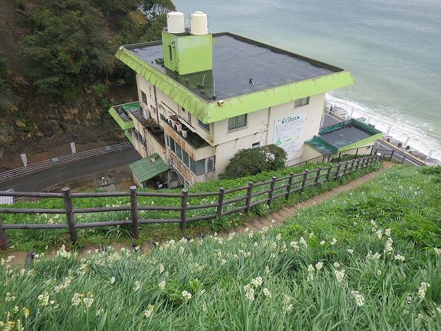 灘黒岩水仙郷 (18)