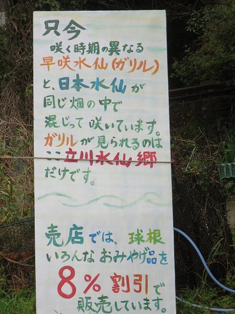 立川水仙郷 (3)