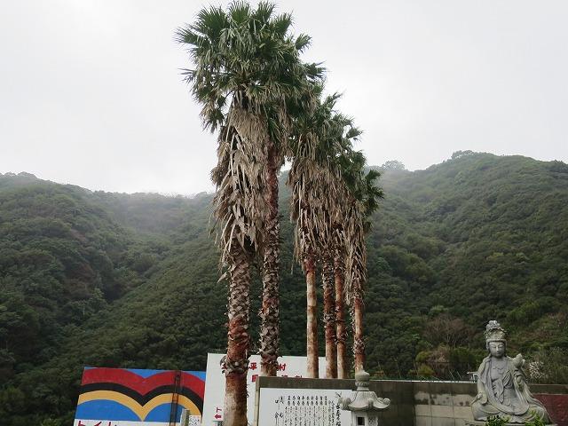 立川水仙郷 (7)