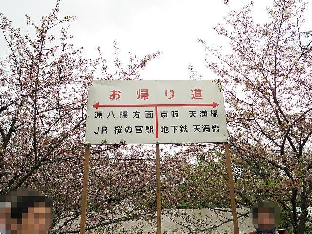 造幣局通り抜け (19)