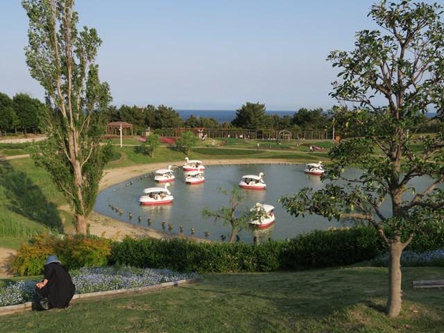 国営 明石海峡公園 (6)
