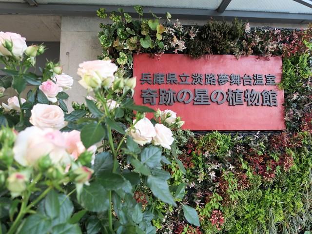 国営 明石海峡公園 (9)