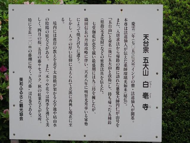 白毫寺(藤の花) (1)