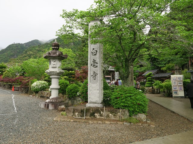 白毫寺(藤の花) (2)