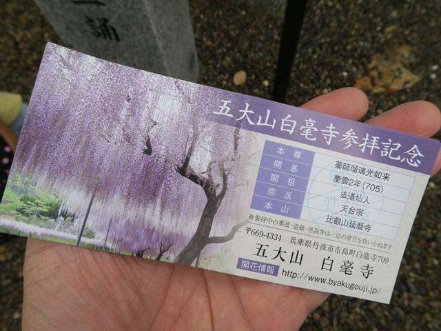白毫寺(藤の花) (3)