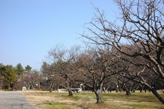 南公園 葵梅林