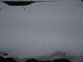 岐阜県揖斐郡揖斐川町東杉原辺り 猿の足跡