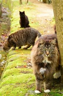 岡崎市 南公園 猫