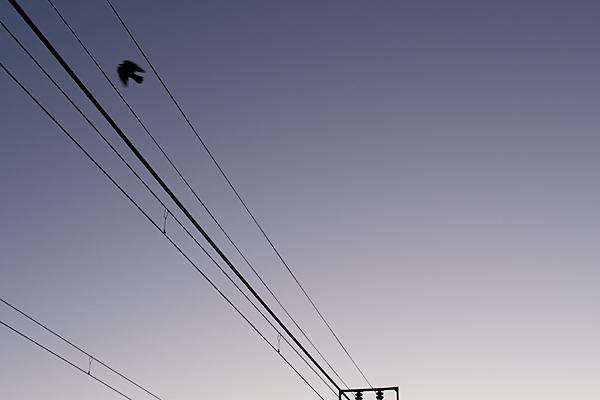 鳥風景-9