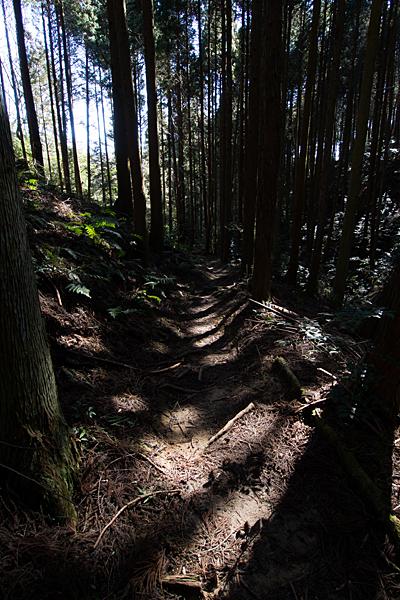 海上の森2-4