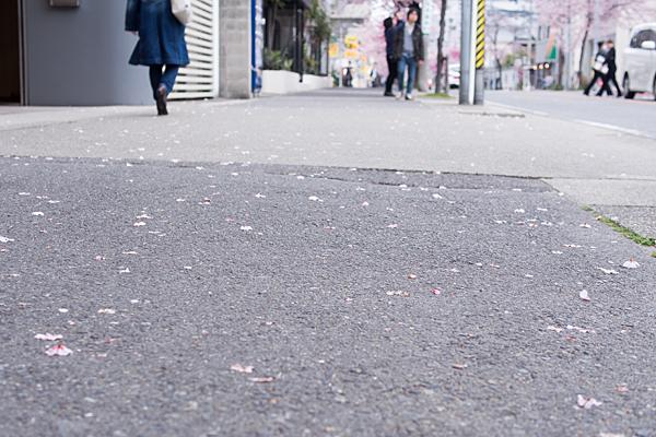 高岳桜2-9