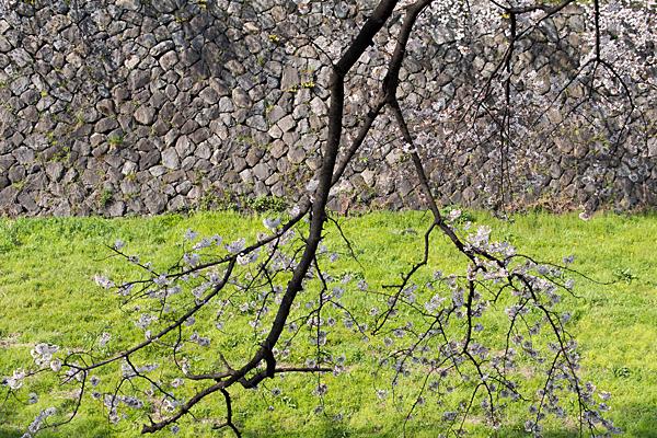 桜1-10