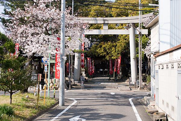 桜1-11