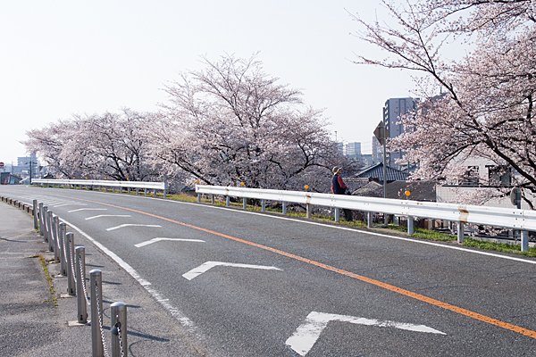 桜1-12