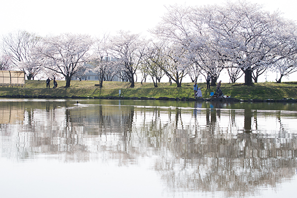 桜2-10