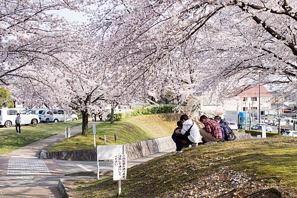 桜2-11