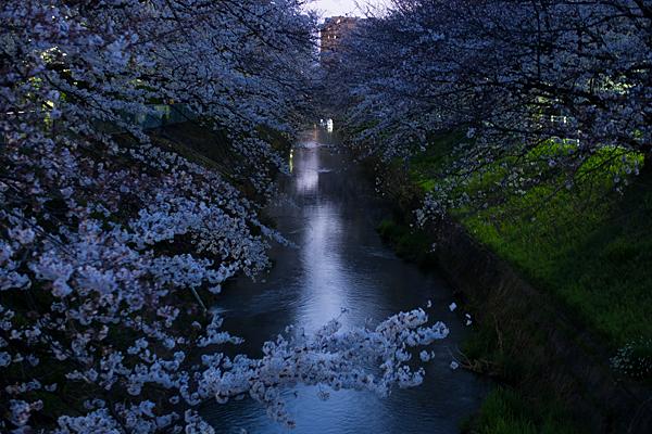 桜9-12