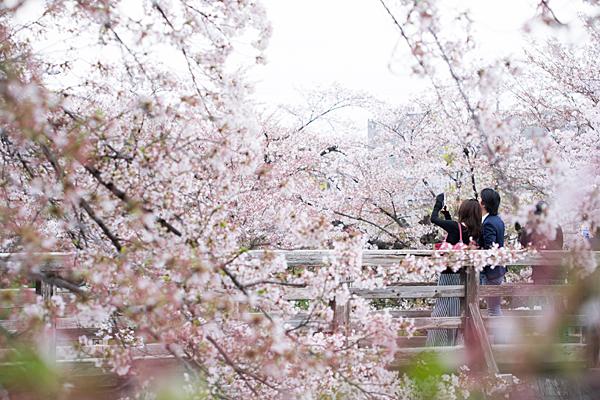 桜10-11
