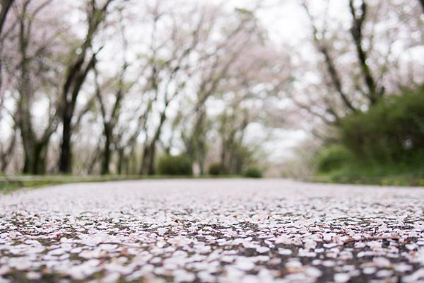 桜10-2
