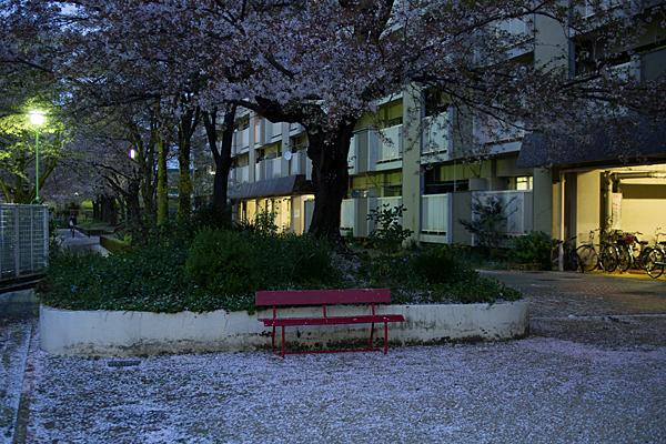 桜11-11