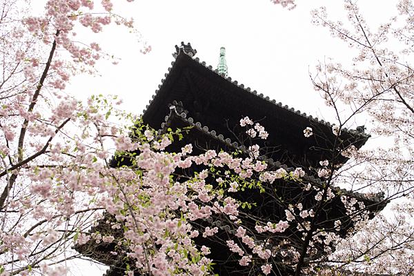 桜11-3