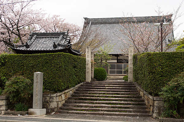 桜11-6