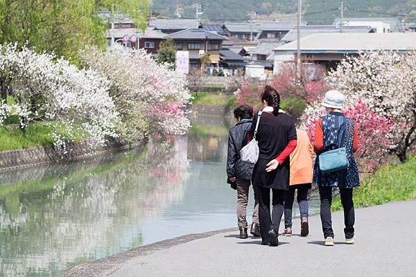 桂川花桃と訪れる人たち