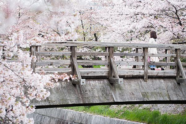 桜6-11