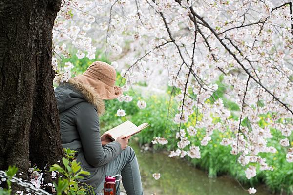 桜6-12