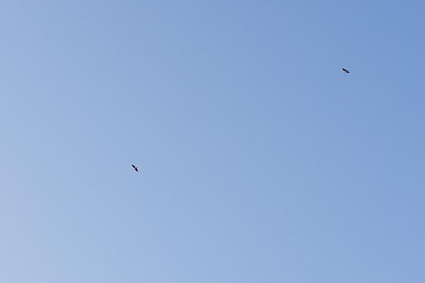 鳥風景-4
