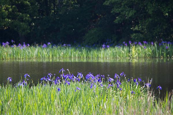 小堤西池-1