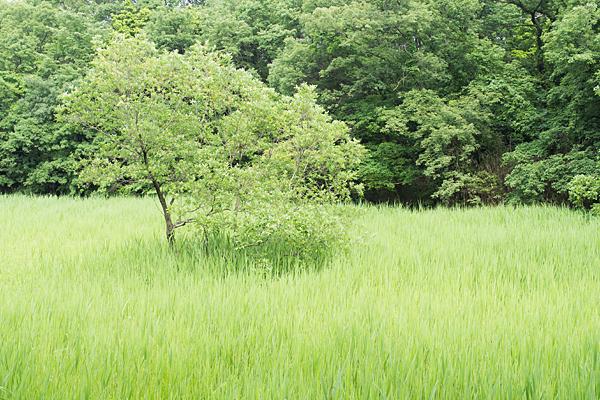 塚ノ杁池3
