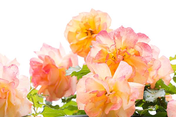 花フェスタ4-10
