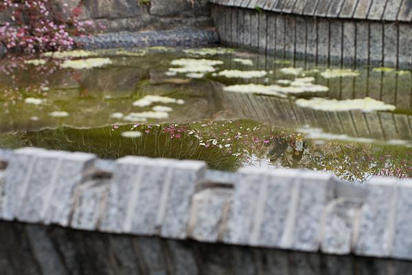 東山植物園-4
