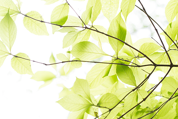 東山植物園-12