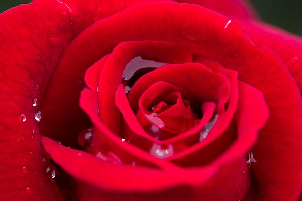 花フェスタ5-12