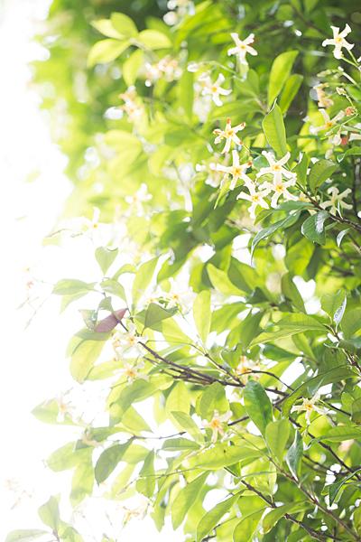 東山植物園-9