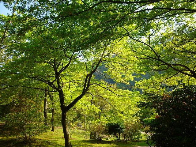 15,4,18 嵐山 (16)