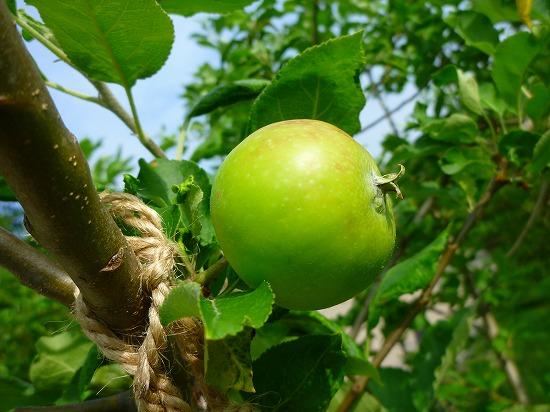 15,6,24 ニュートンのリンゴ (2)