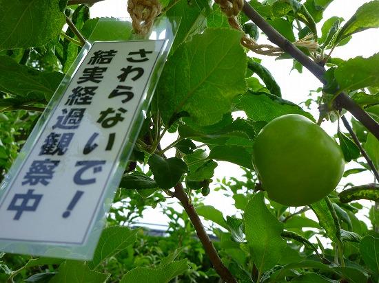 15,6,24 ニュートンのリンゴ